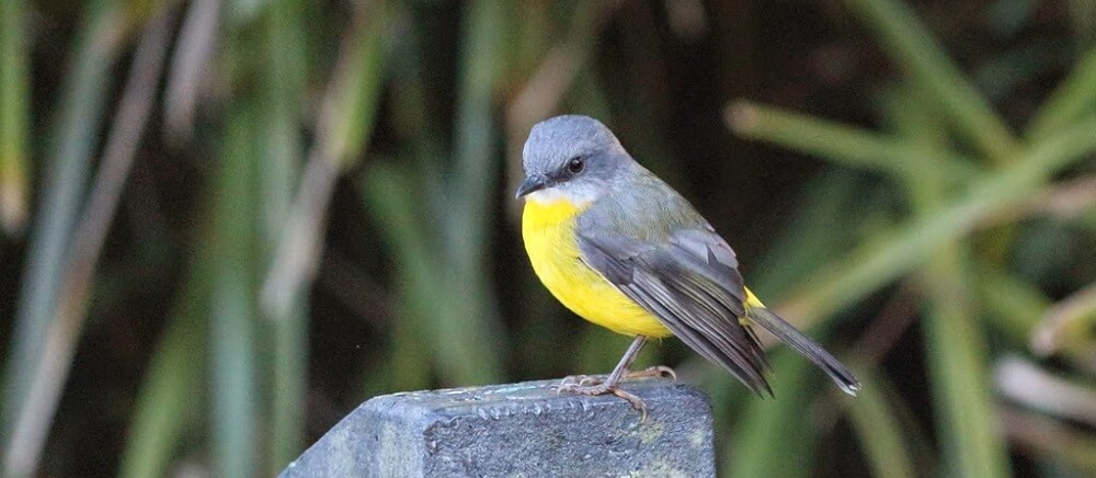 The Birds, Animals and Plants of Springbrook Mountain