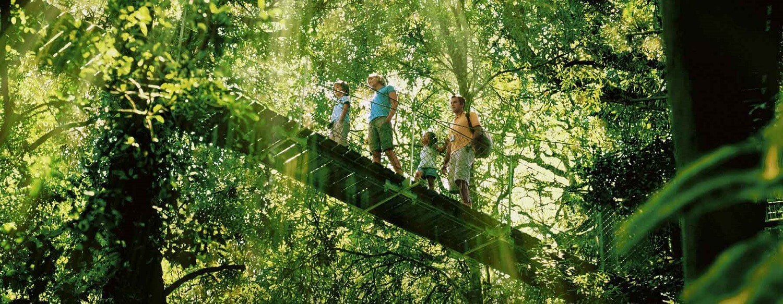 Where is Gondwana Rainforest?