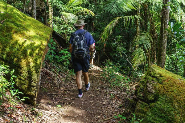 What to See and Do at Springbrook National Park