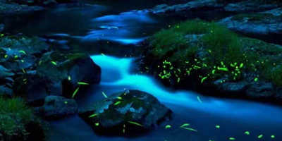 Glow Worm Evening Tour $89